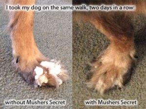 mushers paw