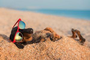 Mushers Secret Dog at the Beach