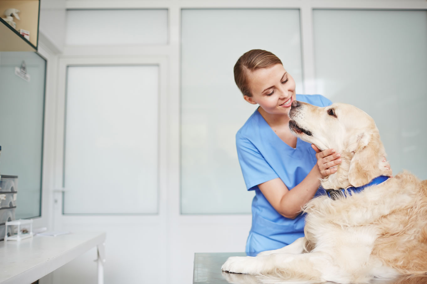 Mushers Secret Ways to Get Your Dog to Love Their Vet