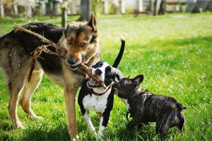 Mushers Secret Dog Park Prep