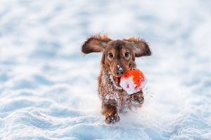 Mushers Secret Prepping Your Dog for a Winter Adventure