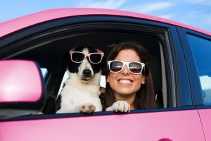 Mushers Secret Road Trip Essentials With Your Legged Friends